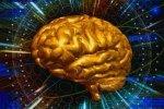 Как работает  долговременная память