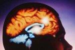 Взаимодействие и независимое сосуществование кратковременной и долговременной памяти